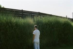 canino-en-el-jardin